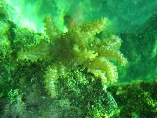 tảo xoắn Nhật Bản Spirulina 2200 viên-1